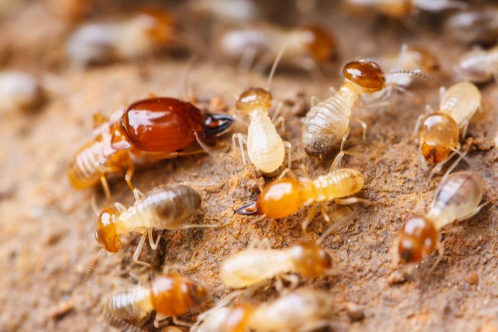 Общественные насекомые: Как и почему возникают касты