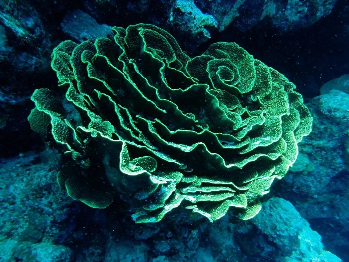 Монстр глубин: безмерно древний, гигантский и радиоактивный