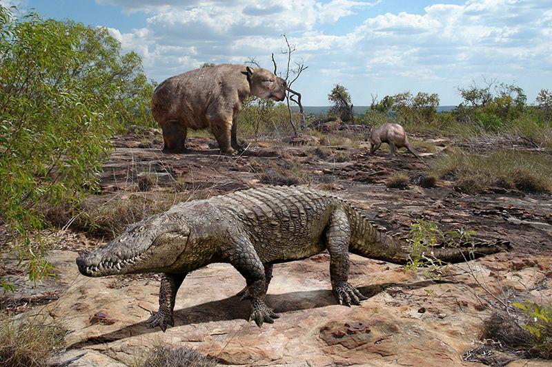Доисторическая Австралия: Гигантские ящеры — современники людей