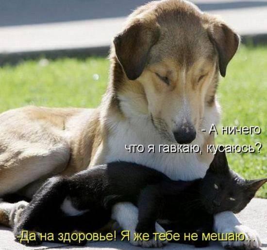 Собаки: Как возникли породы