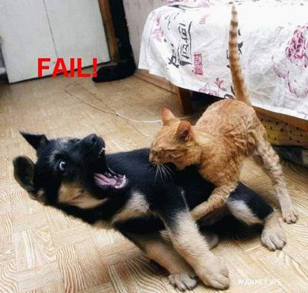 Если бы собаки могли говорить