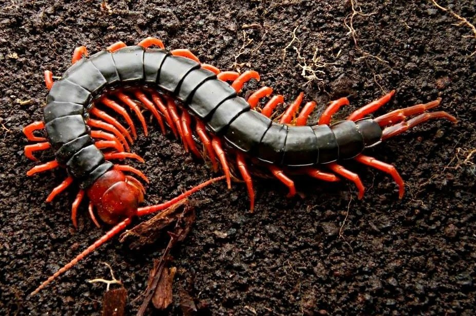Как мутации и отбор создают новые виды животных