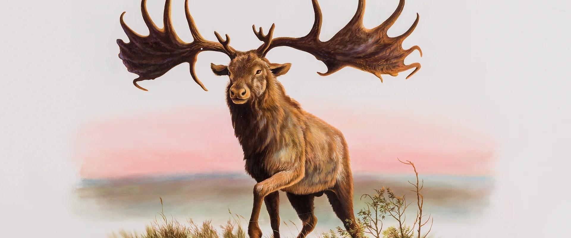 Большерогий олень: Самый рогатый рогоносец и его секреты