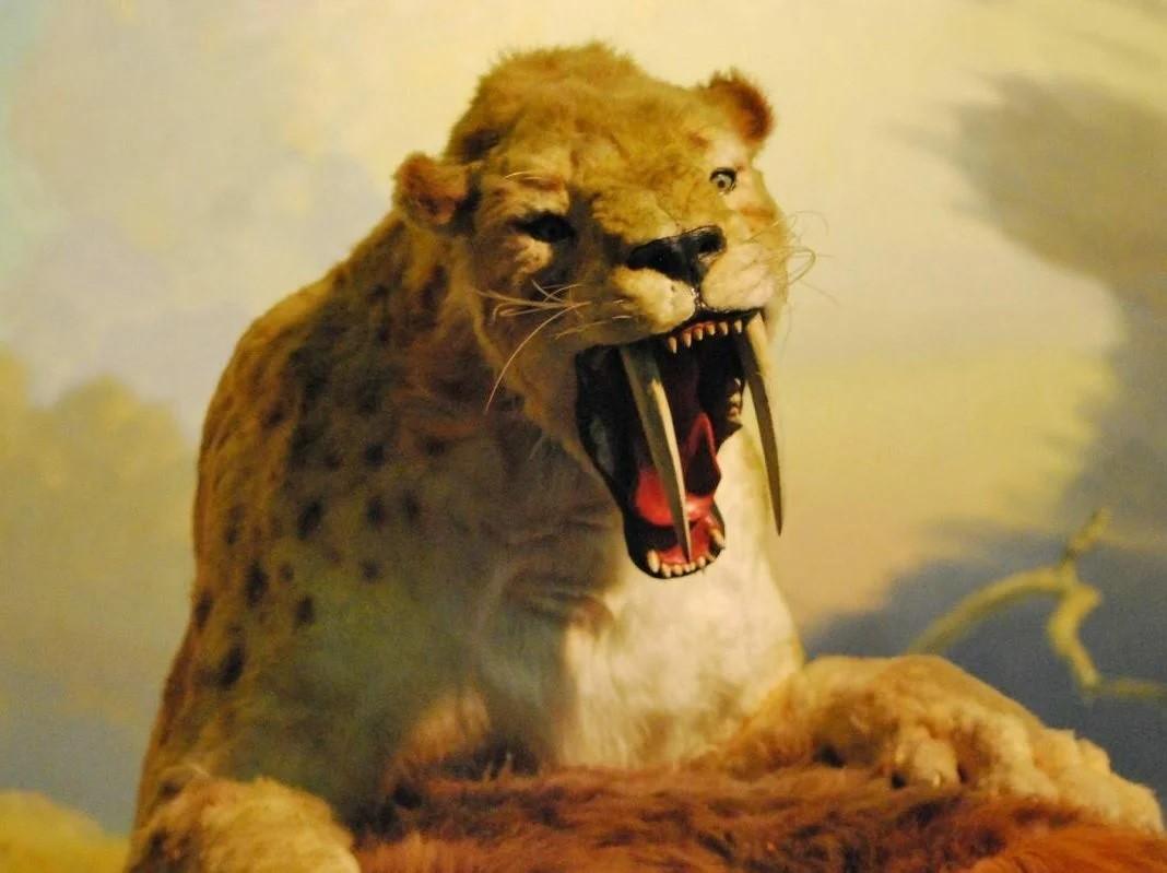 Саблезубый тигр: Самый загадочный зверь плейстоцена