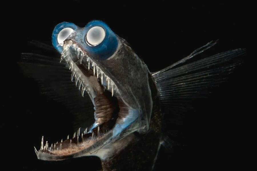 Почему глубоководные рыбы уродливы