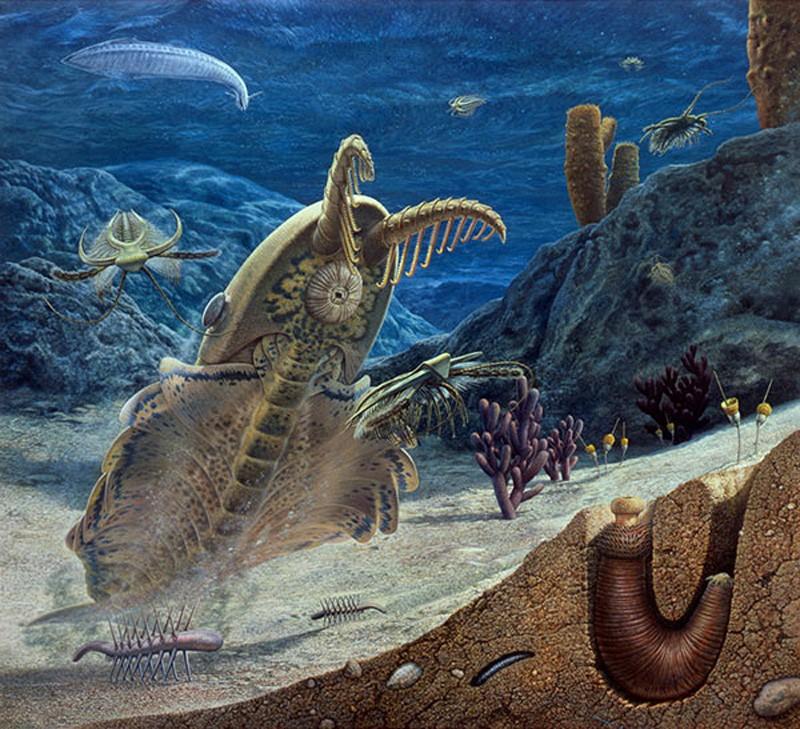 Динокариды: Ужас кембрийских морей