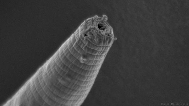 Червь из Бездны: Литосферные организмы