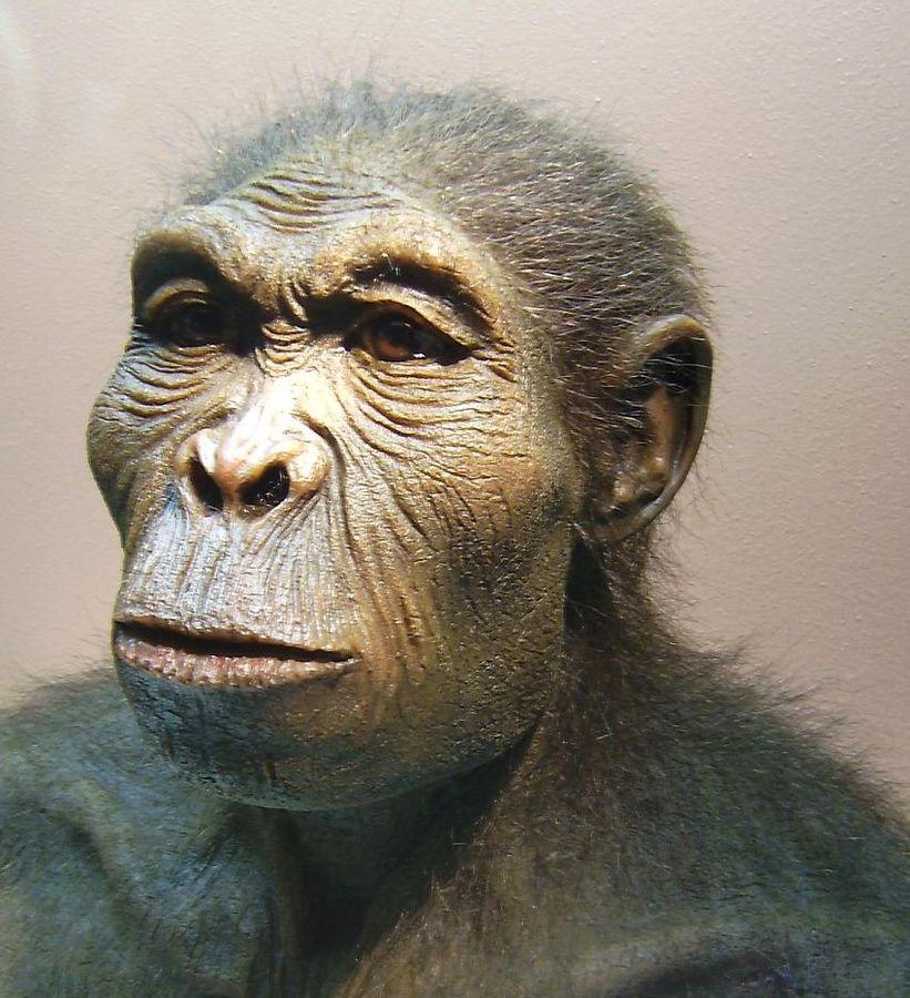 Когда и зачем у предков людей появилась борода
