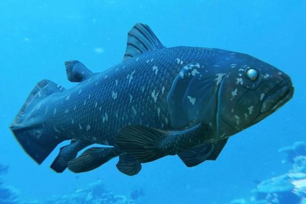 Что такое «живое ископаемое», и почему эволюция иногда отдыхает
