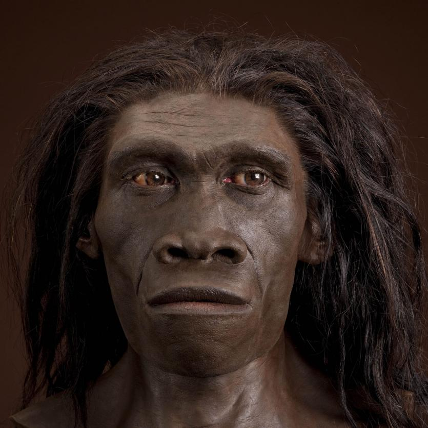 Антропогенез 0.3-1 миллион лет назад: Слишком много предков