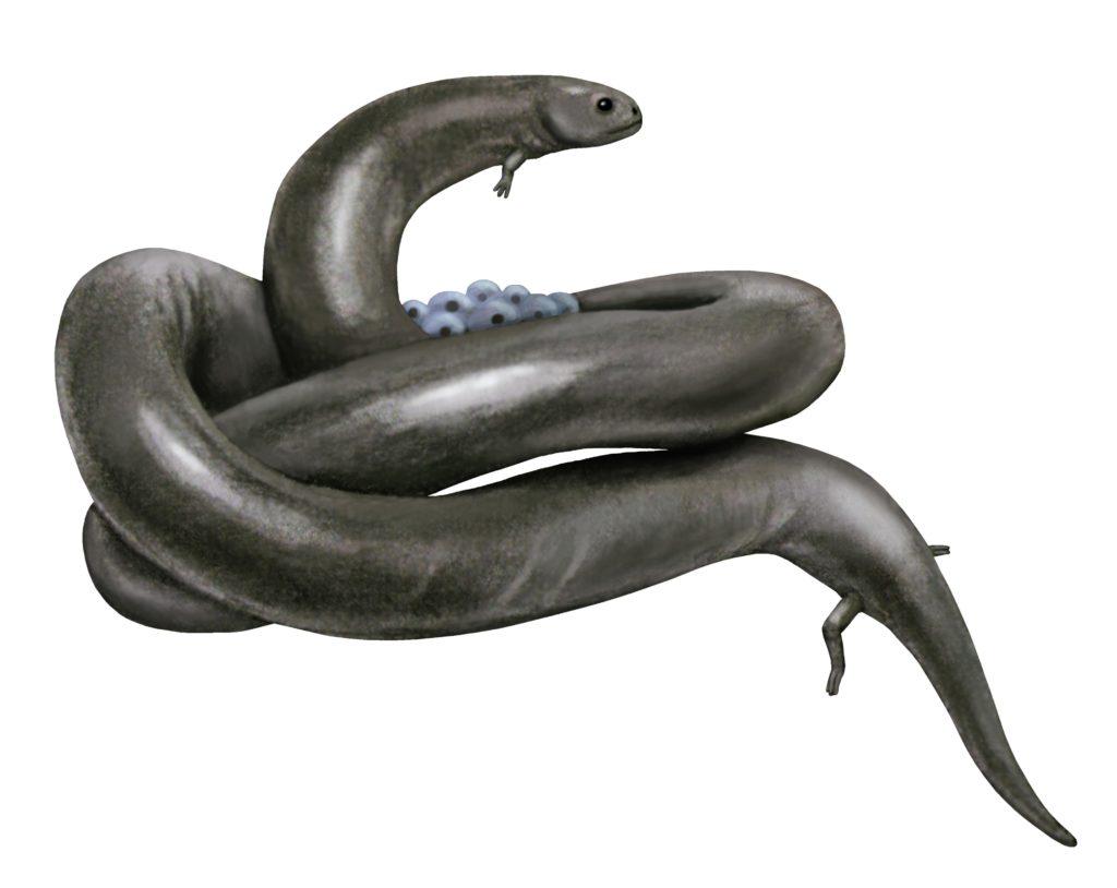 Пермский период, часть 6: Ядовитые акулы и просто ящерицы