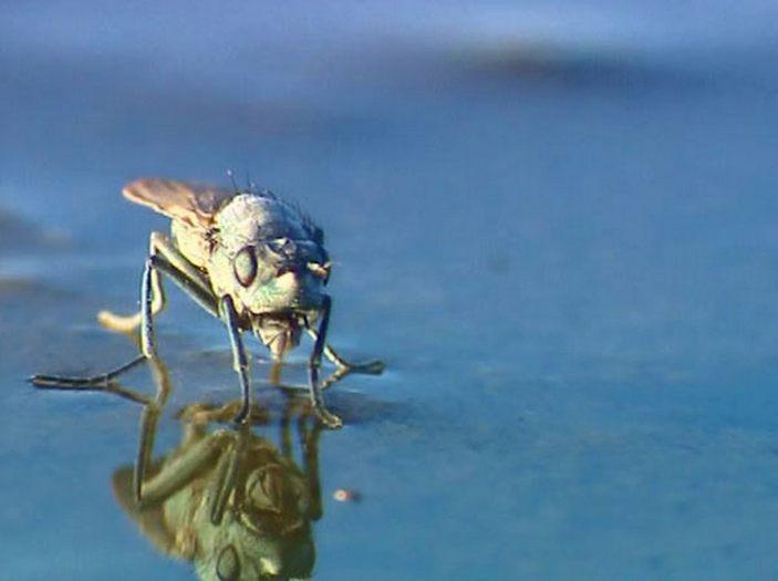 Нефтяная муха: Насекомое, которое смогло