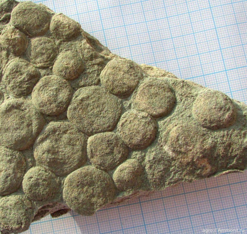 Франсвилльская биота: Жизнь 2.1 миллиарда лет назад