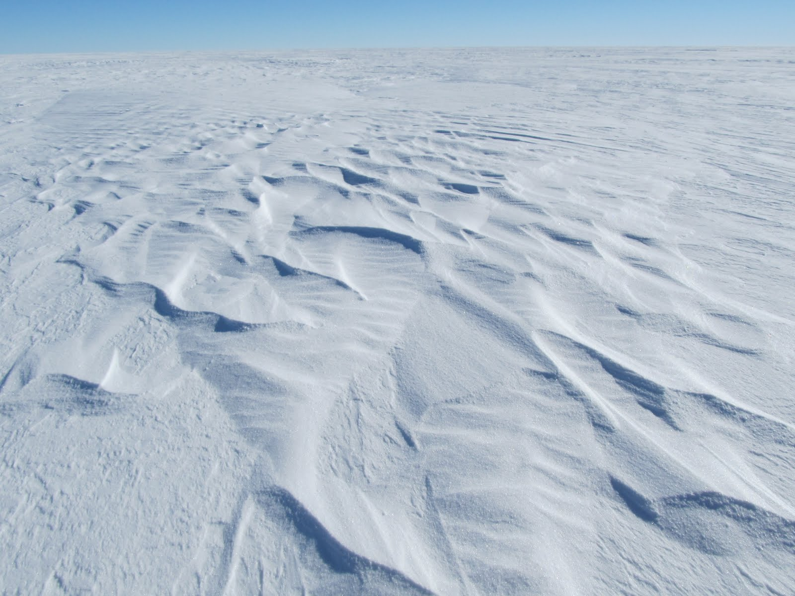 Коллемболы: Кого Антарктида скрывает в снегах