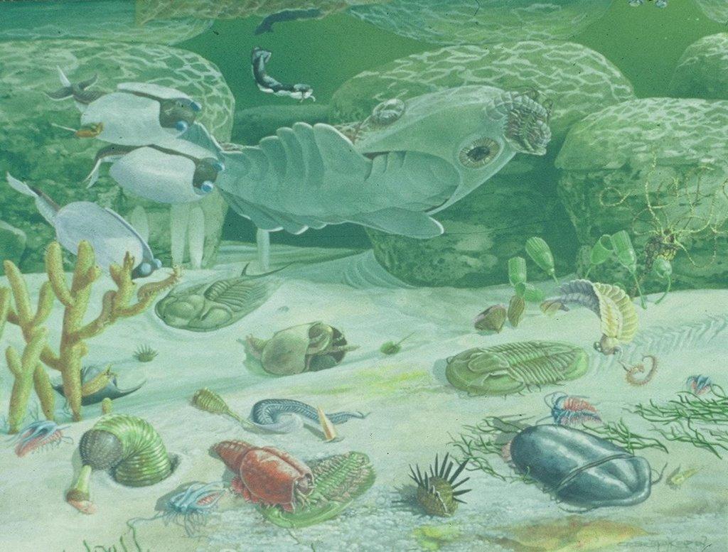 Кембрийский мир, часть 9: Стрекающие, губки и черви