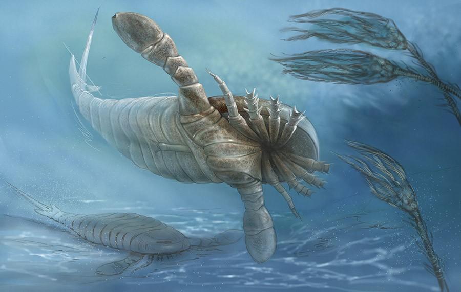Чем объясняется палеозойский гигантизм членистоногих