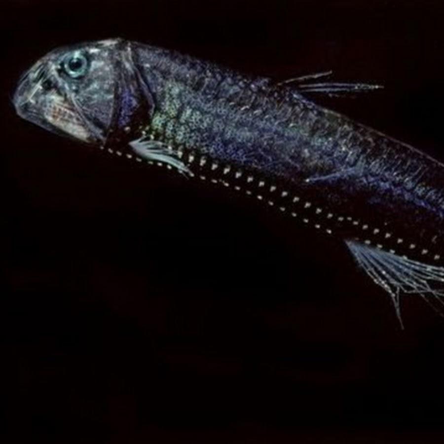 Глубоководные рыбы-невидимки и их пещерные аналоги