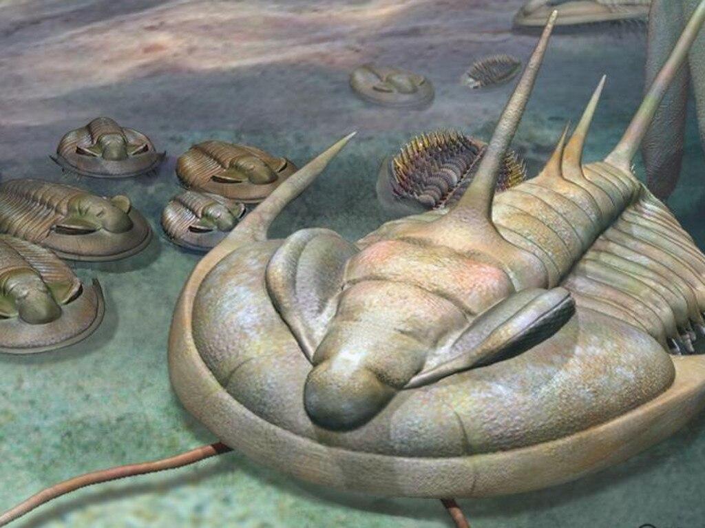Кембрийский мир, часть 15: Рыба со вторым позвоночником