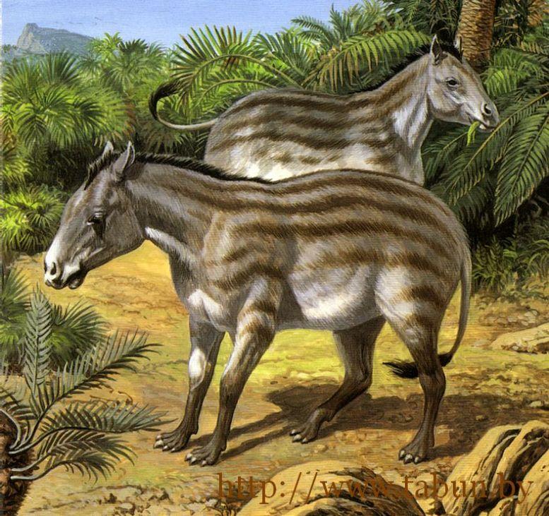 Эволюция: Почему переходные формы так трудно найти