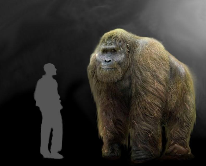 Гигантопитек: Могла ли гигантская обезьяна стать предком разумной расы?