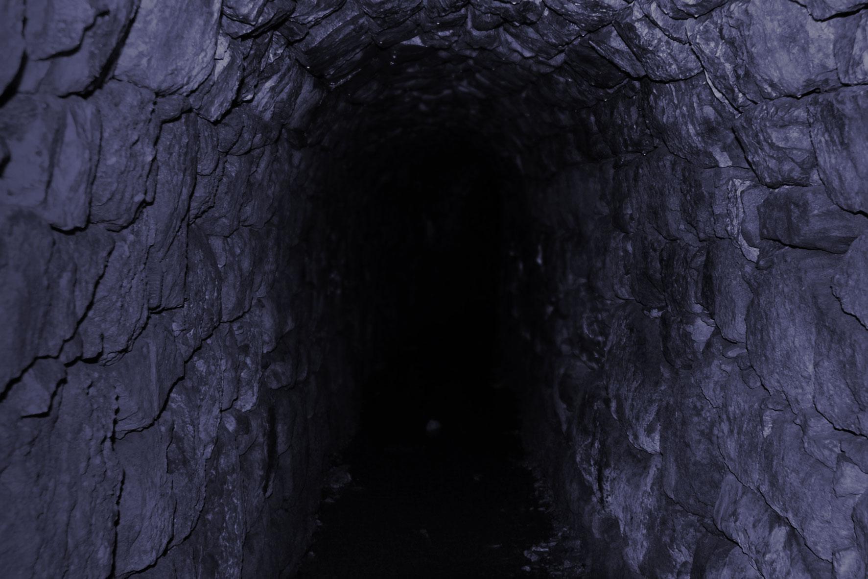 Флора подземного мира: Фотосинтез в полной темноте — возможен