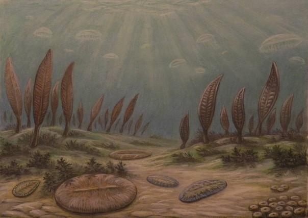 Неопротерозой: Эволюция жизни 1000-541 миллион лет назад