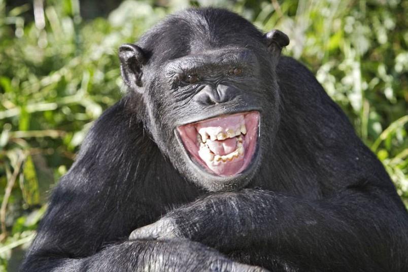 Почему людям пришлось происходить именно от обезьяны?