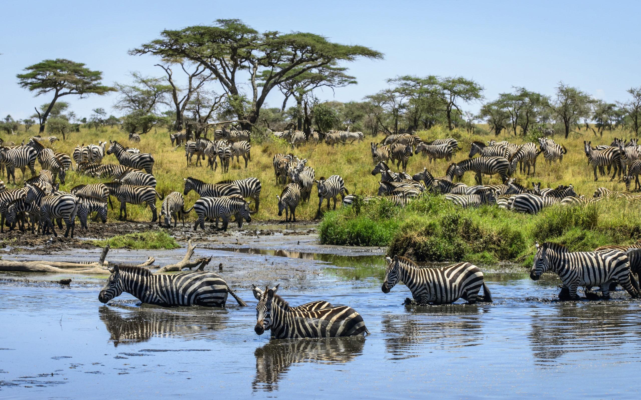 Африканское происхождение человечества: В чём проблема?