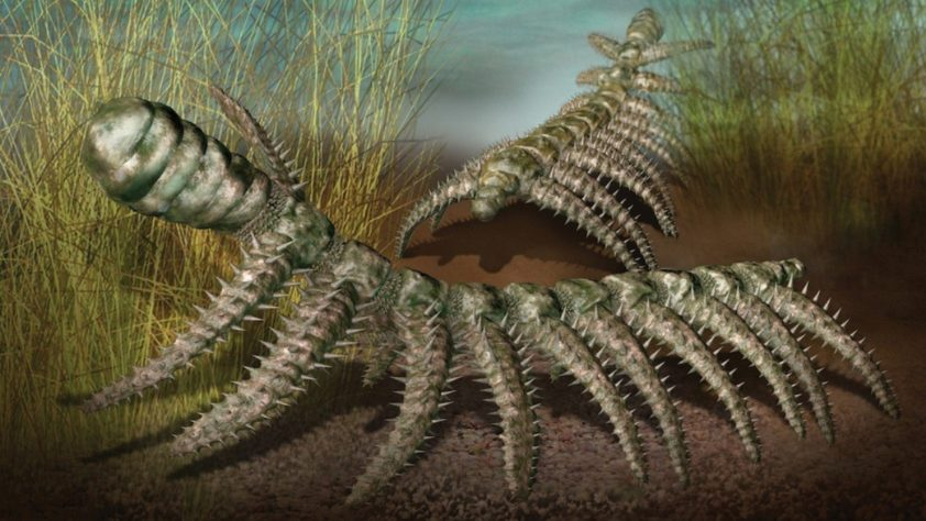 Диания: Кембрийский монстр, идущий своим путём