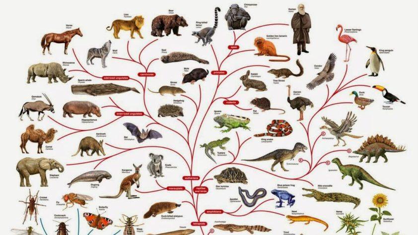 Эволюционная теория: В чём проблема?