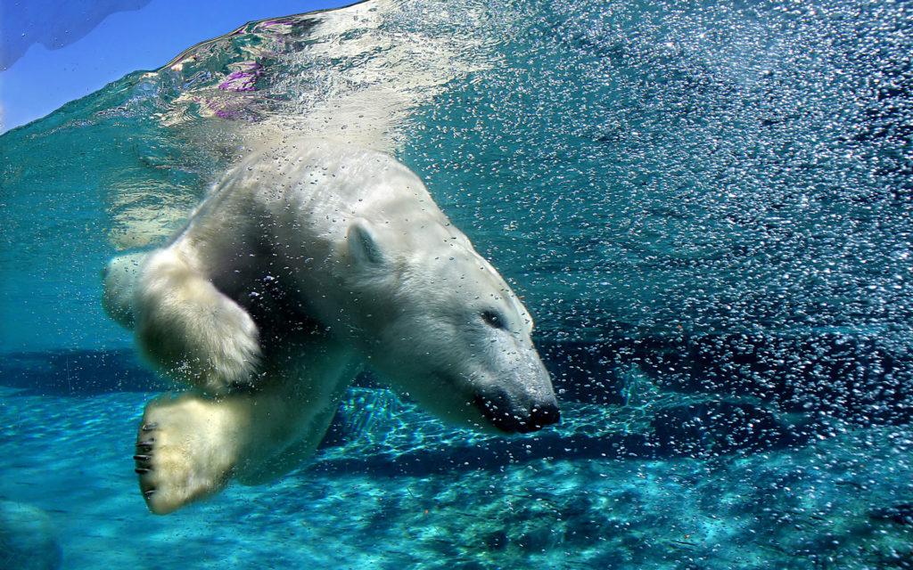 Южный берег: Русская Арктика